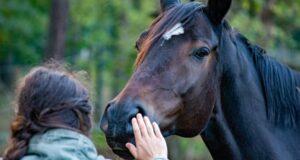 Pferdepflege – was sollten Reitanfänger darüber wissen?
